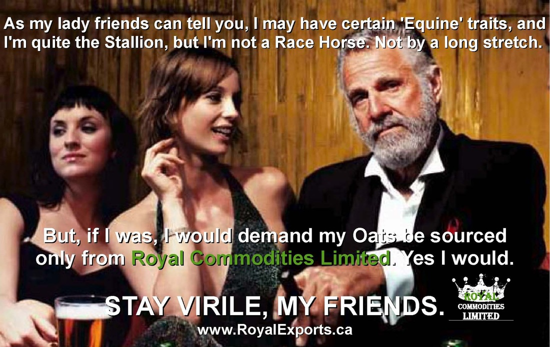 Dos Equis or Dos Equine Most interesting Man Meme by Sean Riley at SeanRileyOnline.com